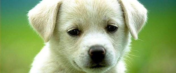 Ankara'da köpekler zehirlenmeyecek