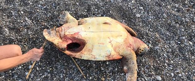 kaplumbağa.jpg