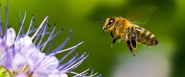 arı soktu.jpg
