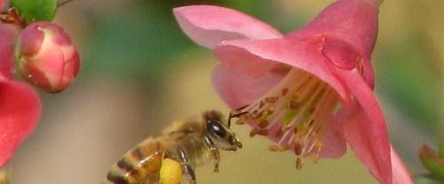 Arıların gizemi