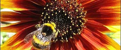 Arıların iniş pisti şeritli çiçekler