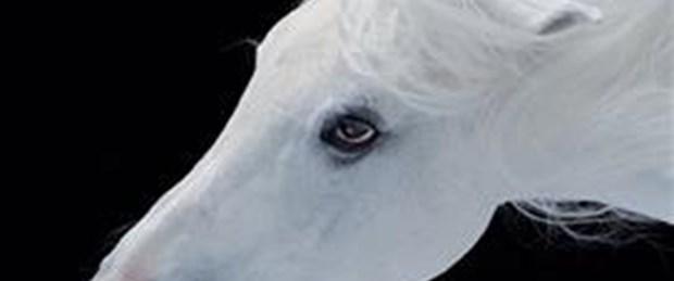 Atlar ölüme mi terkediliyor?