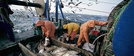 Avrupa balıklarını kurtarmak istiyor