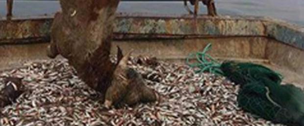 balıkçı ağı dana.jpg