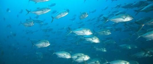 Balıklardan plastik çıktı