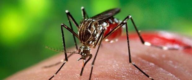 aedes sivrisinek için ilk aşı.jpg