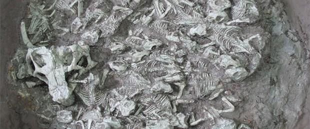 Bebek dinozor mezarlığı