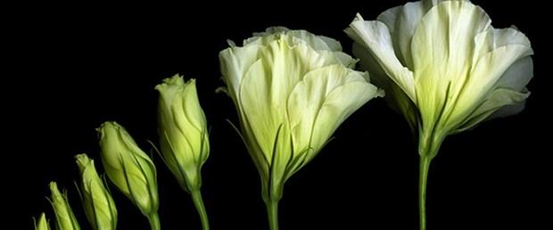 Bitkiler matematik sayesinde hayatta kalıyor