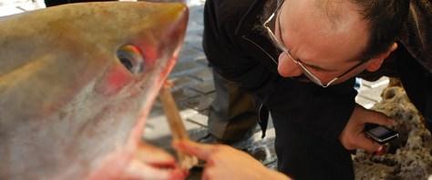 Boğaz'da 3 köpekbalığı yakalandı