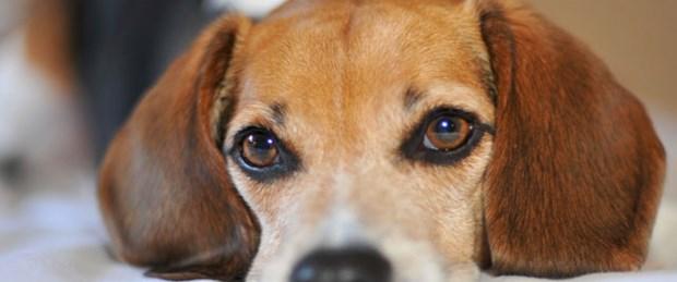 Borç yüzünden köpeğe haciz