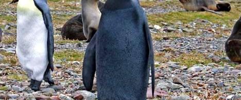 """""""Böyle penguen görmedim"""""""