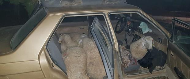 koyunları çaldı.jpg