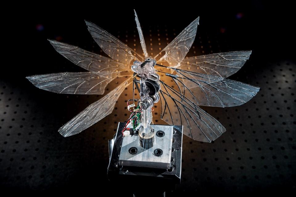 Her biri 7,5 santimetrelik iki robotik güve kanadı ABD'de, Ohio'daki Hava Kuvvetleri laboratuvarında bir teste tabi utuluyor (Büyütmek için tıklayın).