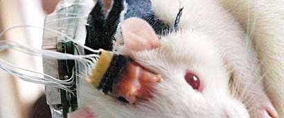 Cep telefonu fareye yaradı