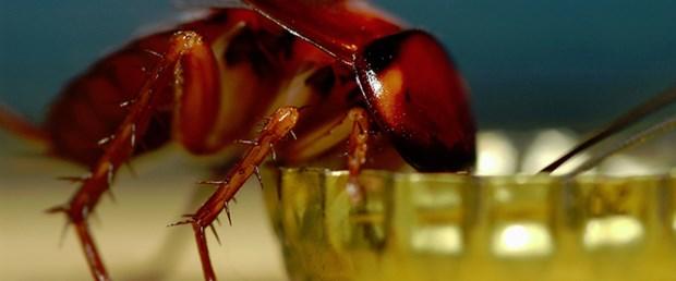 'Çiftlikten 1 milyon hamamböceği kaçtı'