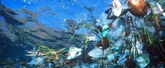 Çöp girdapları deniz yaşamını yutuyor