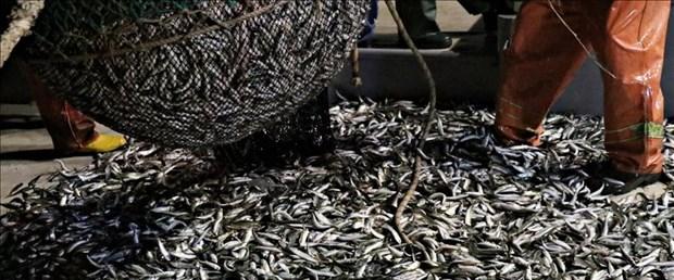 balık av.jpg