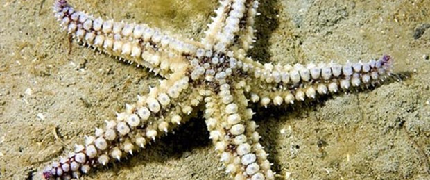 Denizyıldızından tıbbi destek