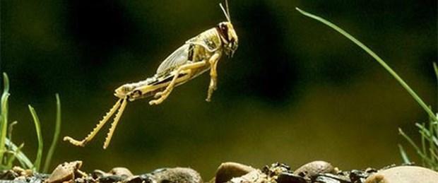 Depreme karşı böcek kanadı