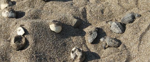 yuvalari-su-altinda-kaldi-carettalar-telef-oldu_1689_dhaphoto1.jpg