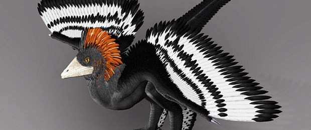 Dinozorun gardırobu