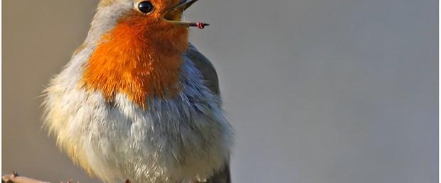 Doğayı kuşlarla tanıyın…