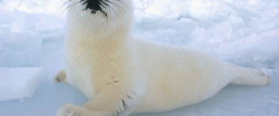Dünya'da kaç canlı türü var?