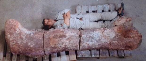 Dünyanın en büyük dinozoru bulundu