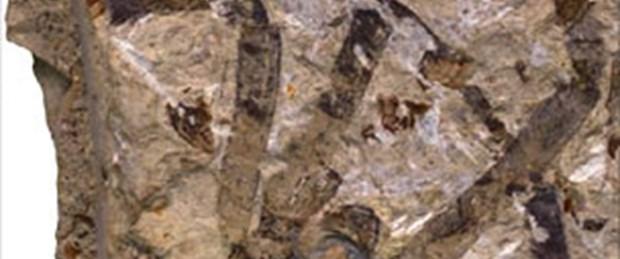En büyük örümcek fosili bulundu