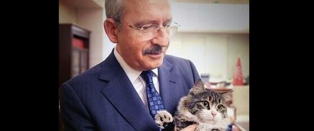 'En sosyal demokrat kedi'