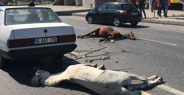 Eskişehir'de otomobilin çarptığı başıboş iki at telef oldu