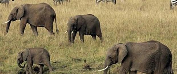 Filler tarih mi olacak?