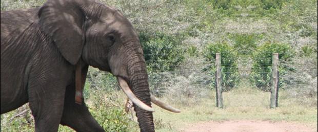 Fillerin yaramazlıkları kısa mesajla engelleniyor