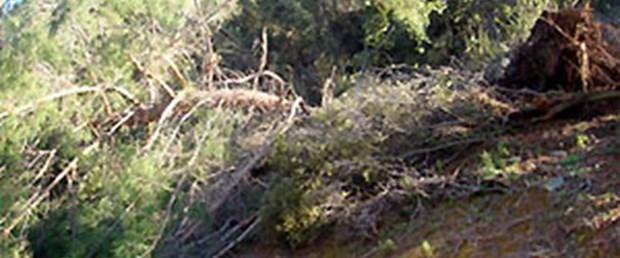 Fırtına 15 hektarlık ormanı yok etti