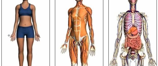 Google'dan insan vücudu haritası