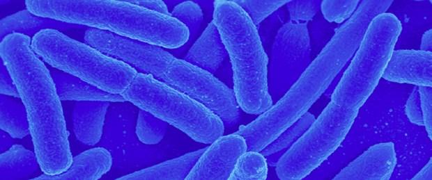 Haliç tabanındaki bakteriden enerji üretildi