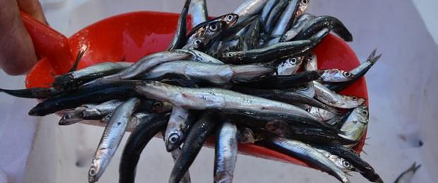 hamsi balık.jpg