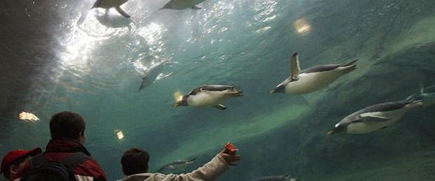 Havalanan penguenlerin sırrı tüylerinde
