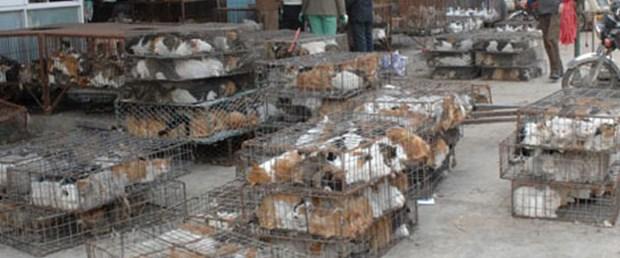 Hayvan ticaretinin maliyeti