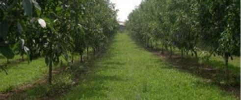 Hazine'ye ait kıraç arazi artık ceviz bahçesi