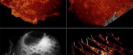 'Hücre'den ilk canlı yayın