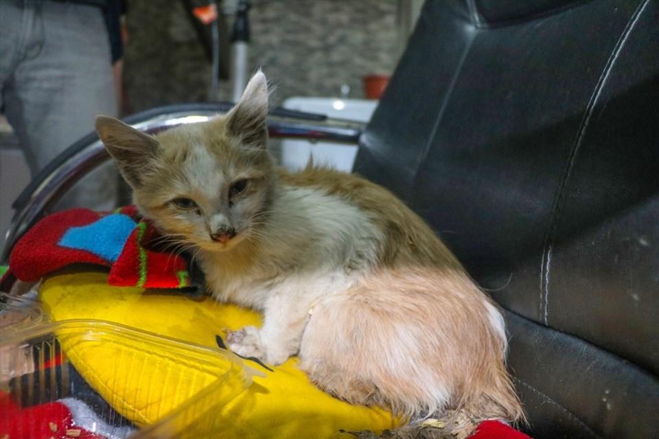 Iğdırda Ayakları Kesik Halde Bulunan Yavru Kedi Tedavi Altına
