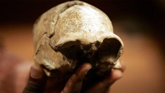 2 milyon yıllık Homo erectus kafatası.