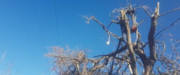imam ağaç budarken öldü.jpg