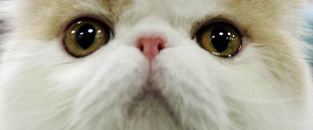 İran Uzay'a kedi gönderecek