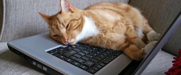 İşbaşında kedi videoları izleyerek zengin oldu