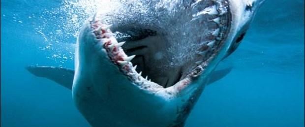 İşte köpek balığı gerçeği!