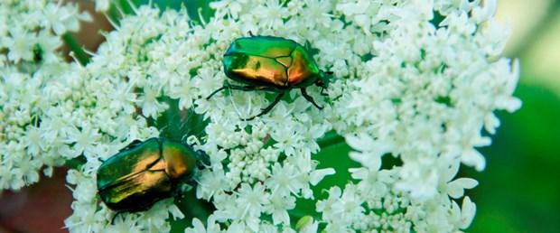 böcek arşiv.jpg