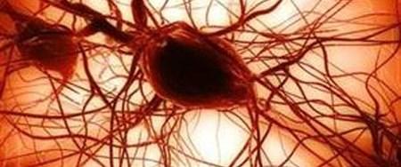 Kandan kök hücre üretildi