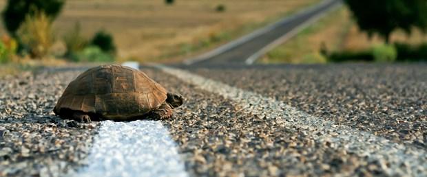 yol kaplumbağa.jpg